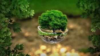 życie w zgodzie z naturą